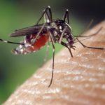 Kłopotliwe komary
