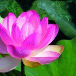 Moc kwiatów zaklęta w kosmetykach
